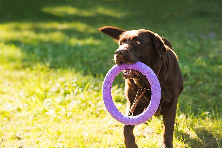 5 Remedios Caseros Para Que El Perro No Muerda Los Muebles